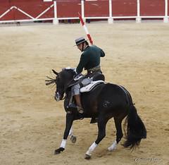 _DSC0523-2 (chris30300) Tags: france les cartagena corrida toro palavas rejon palavaslesflots flots languedocroussillonmidipyrnes languedocroussillonmidipyrn