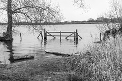 The Gate (Alanchippyh) Tags: trees white black waterreflections hedgegatetrees sony77ii