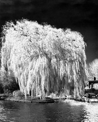 The Witching Willow (Sir Hectimere) Tags: weepingwillow riverthames