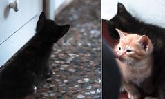 43/365 (ana.sousa129) Tags: blue orange baby white black cute beautiful yellow cat blackcat orangecat floor 365 cutecat pelo babycat beautifulcat