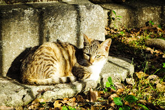 Today's Cat@2016-05-16 (masatsu) Tags: cat pentax catspotting mx1 thebiggestgroupwithonlycats