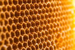 beehive (noor.khan.alam) Tags: wild food abstract macro nature up animals yellow closeup thailand gold golden moving healthy woods pattern close sweet eating authority working large cell lifestyle insects sugar queen bee busy health honey agility backgrounds hexagon medicine wax pollen care shape honeycomb healthcare beehive leadership studious freshness combing efficiency beekeeper beeswax honeyed praiseworthy