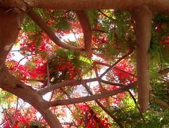 / Hut in Paradise (Wallik) Tags: light tree bright foliage blooming