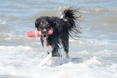 FAN_5760.jpg (Flemming Andersen) Tags: dogs water denmark seaside spring hund dk hurup nykbingmors northdenmarkregion