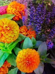 Floral Fantasia (bethrosengard) Tags: photomanipulation digitalart photoart digitallyenhanced digitalmagic bethrosengard enteredinsyb