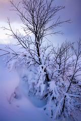 115.365 Purplish snow (magaly.frances) Tags: hiver islande reykjavik lumière couleur mauve rose iceland icelandair icelandairhotels snow winter purple pink purplish light nikond5200 photography landscape