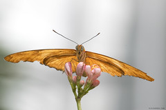 Butterfly 2016-53 (michaelramsdell1967) Tags: flowers light plant flower color macro love nature beautiful beauty animal animals closeup butterfly bug garden insect photography hope spring nikon natural bokeh vibrant wildlife butterflies vivid insects bugs zen