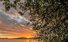 Flower Power (ordjuret) Tags: sunset summer sky sun color tree water clouds river leaf lv gta