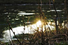 Nevertheless, feel free! (nathaliedunaigre) Tags: sunset mountain nature montagne reflections freedom spring free libert reflets printemps libre coucherdesoleil tang barbels wildgrass herbes