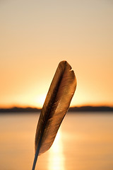 (Stephanie Boettcher Photography) Tags: sunset summer sun lake nature water nikon feather warmth