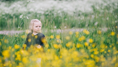 Summer memories (JuNu_photography) Tags: flowers summer field espoo finland children child photoshoot mark iii young 85mm sigma 5d 5d3