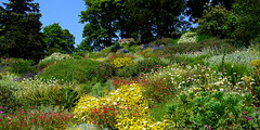 Floral melange (Peter.S.Roberts) Tags: flowers blue trees summer sky plants hot colour green english nature floral beautiful fauna landscape botanical interestingness interesting flora nikon dof pov stones wildlife country picture sunny explore flowering greenery wildflowers colourful botany melange shrubs ness shrubbery rockery wirral perennials alpines neston peterroberts inexplore flickriver nikond7000 fluidr
