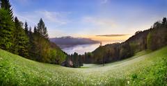 Narcisses-2016 (Andy'z Art) Tags: sunset lake landscape switzerland nikon suisse geneva geneve swiss lac nikkor leman narcissus montreux 2016 narcisses caux andyz 1424 nikond800 andyzart sunsetmontreuxswitzerlandandyzartnikond8002870f2