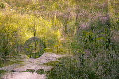 Summer's Past (Jason Riley Photography) Tags: painterly summer
