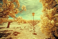 Birdhouse New Mexico ([ raymond ]) Tags: trees sky newmexico southwest nature yellow landscape outdoors gold desert horizon birdhouse foliage infrared falsecolor americansouthwest img4747