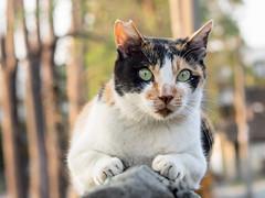 P4085792 (daisuke1230) Tags: cat olympus neko em  m43