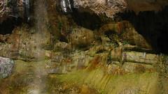 Spraygarden/Seepgarden (Dru!) Tags: plants usa utah waterfall ut sandstone desert spray oasis watergarden algae biology escalante utahtrip hanginggarden uppercalfcreek seepage