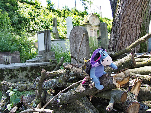 Eeyore in the cemetaey behind the church on the hill