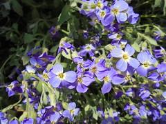 967 (en-ri) Tags: sony lilla fiorellini sonysti