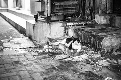 Street cat (heshaaam) Tags: street blackandwhite bw cats cat bahrain documentary muharraq alhidd