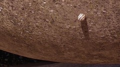 Snail and Urn, Poggibonsi, Siena, IT (Patterns and Light) Tags: italy brown urn video mother snail kenburns 2016 oliveoilurn