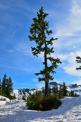 Mt. Baker - Snoqualmie National Forest ( Peterson Photogr@phy) Tags: forest snowscape snoqualmienationalforest