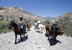 A Red Rock Canyon National Conservation Area trail was spiffed up with the help of pack mules! (BLM Nevada) Tags: horses usa lasvegas unitedstatesofamerica volunteers trails nv restoration redrock mules blm nca iceboxcanyon nationalconservationarea friendsofredrockcanyon