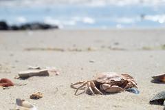The Wadden Sea National Park (Bearforrest) Tags: west beach nature water animals strand denmark coast nationalpark sand sony esbjerg tamron danmark a7 hav dyr vand f35 70150mm vestkyst vadehavet adaptall havdyr regionsyddanmark