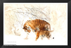 Tigers in the Snow (Pam Saville) Tags: digital art painting tigers snow beautiful serene calming