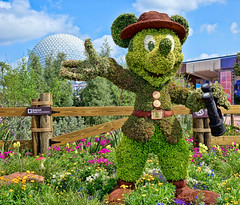 Ranger Mickey - EPCOT Flower and Garden (Curtis Lannom) Tags: disney epcot florida garden magic mickey vacation orlando unitedstates