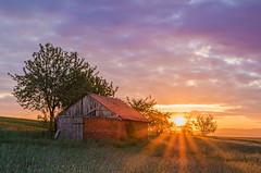 Feldscheune - Pfingstmontag (Der Gnurz) Tags: barn sunrise nikon landschaft sonnenaufgang scheune feldscheune d5100 nikond5100 wasenberg