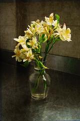Caern ptalos sobre el acero (desde mi corazn) Tags: textura agua cristal botella acero florero floresamarillas alicatado trasparencia