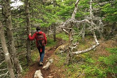 Hiking the East Coast Trail (deanspic) Tags: forest newfoundland path east trail fir spruce borealforest eastcoasttrail g3x nfld2016