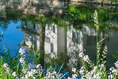 Water, Windows and Wednesday (tquist24) Tags: flowers blue windows house flower reflection green window water reflections geotagged nikon unitedstates indiana wildflowers goshen hww nikond5300 goshenmillracecanal goshenpondtrail