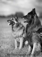 20160621095769 (koppomcolors) Tags: dog dogs hund hundar koppomcolors