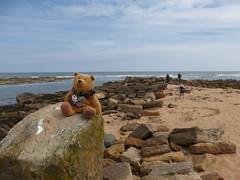 Ted at Cambo Sands (Brian Cairns) Tags: saintandrews cambo fifecoastalpath kingsbarns brianbcairns therockandspindle buddoroack