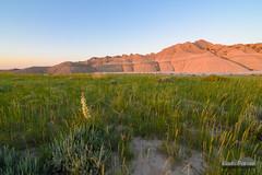 Yucca Badlands Sunrise (kevin-palmer) Tags: toadstool toadstoolgeologicalpark crawford nebraska oglalanationalgrassland june summer nikond750 badlands highplains yucca flower grass green yellow early morning sunrise dawn clear sunny blue sky sunlight tokina1628mmf28