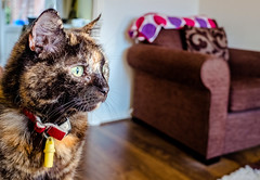 Smudge (June 2016) (6) Fuji X70 Compact) (1 of 1) (markdbaynham) Tags: pet cute animal cat prime feline fuji 28mm smudge fujinon f28 compact x70 apsc fujix 16mp transx