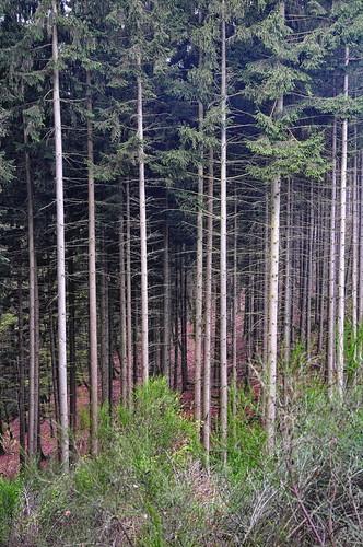 Bos in kleur