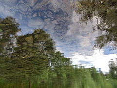 Stoned Trees (andressolo) Tags: trees distortion reflection water clouds ro reflections river agua distorted stones ripple reflected reflect reflejo ripples reflejos piedra distortions