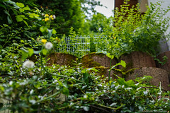 20160626-AA-0509 (andreas.abzieher) Tags: nature canon bokeh wideangle canon6d canonef24mmf14liiusm