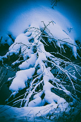 Troubled Bridge Over Water (Jori Samonen) Tags: winter snow tree water finland helsinki branch