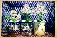 still life_theme-045_007 (kazimierz.pietruszewski) Tags: stilllife colorful cups flowers border