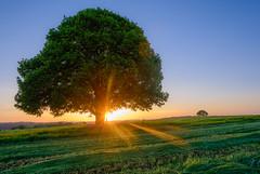 The smell of fresh-mowed grass (karo.perez73) Tags: sunset tree bayern landschaft baum heu