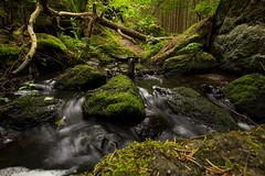 Wildwasser (Stephanie Mnner Photography) Tags: wasser wasserfall outdoor pflanzen bach landschaft wald bume strom farn felsen