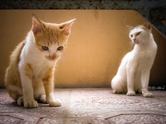 Punished (-clicking-) Tags: light two animals cat kitten duo kitty moment punished lighitng blinkagain