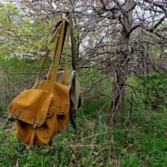 Into the Wild (Lucyrk in LA) Tags: trees chicago green nature canon bag outside outdoors illinois spring waiting natural outdoor hiking may hike il backpack wait hanging greenery hikers wilderness sack patch satchel hang wander chicagoland skokie knapsack chicagoist 2013 skokieil notallthosewhowanderarelost emilyoaksnaturecenter cherylstrayed skokiepatch