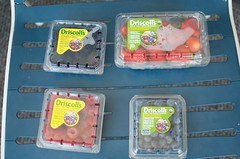 Driscoll's berries (Marisa | Food in Jars) Tags: strawberries raspberries blackberries blueberries berrytour driscollsberries berrybloggers