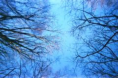Canopy (Saturated Imagery) Tags: blue trees lomography toycamera grain leeds canopy madeinitaly expiredfilm meanwood meanwoodpark ferraniasolaris200 epsonv500 boots200 photoshopelements9 leclicfunshooterfs30