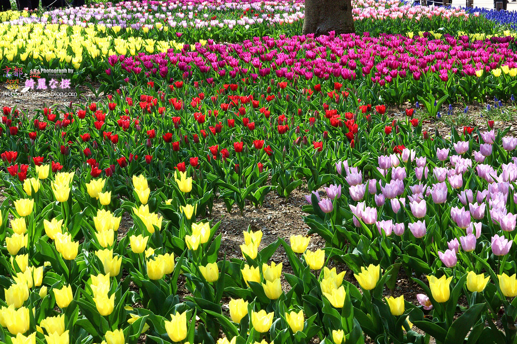 2013-04-05-13h48m12IMG_2588